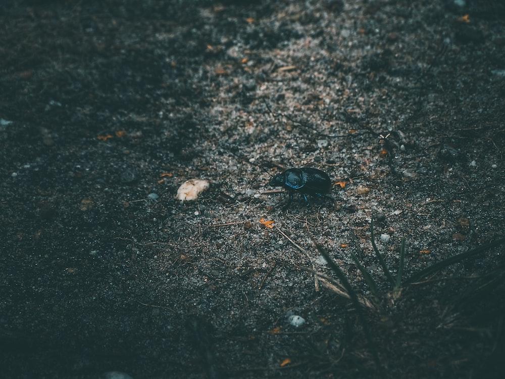black beetle on gray concrete ground