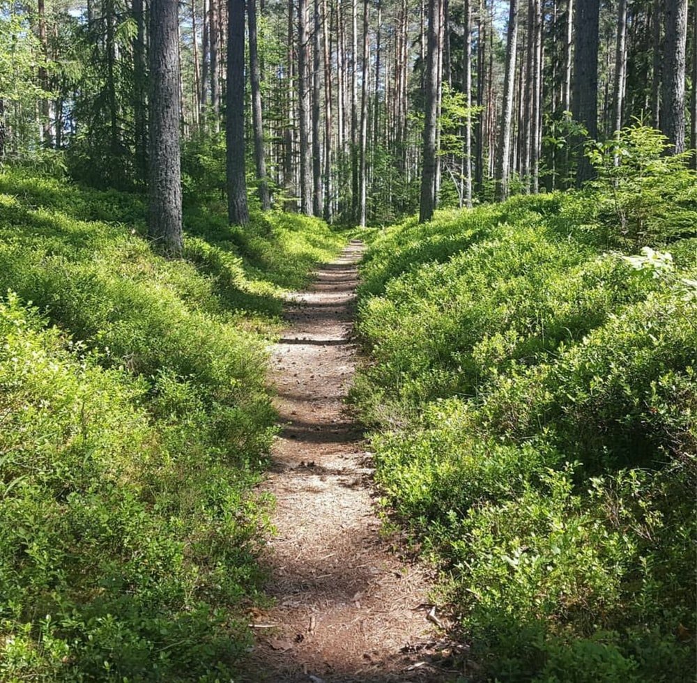 Forest Trail Pictures Download Free Images On Unsplash Nature path forest trees grass bushes