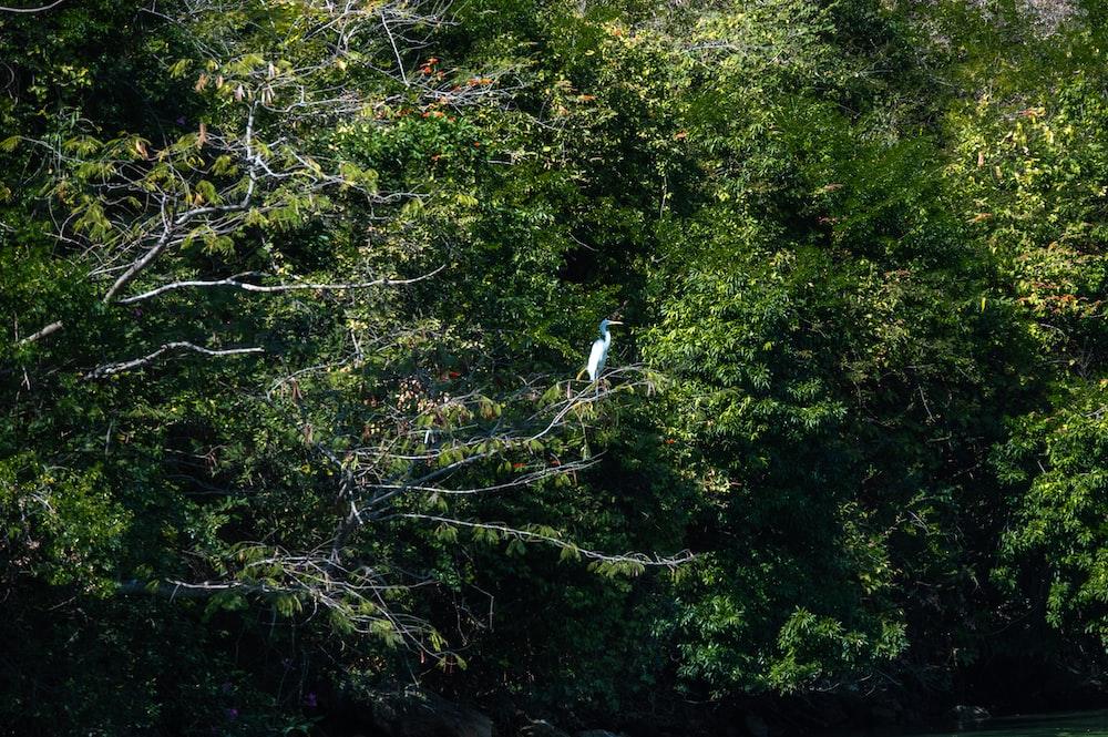 white bird on green tree during daytime