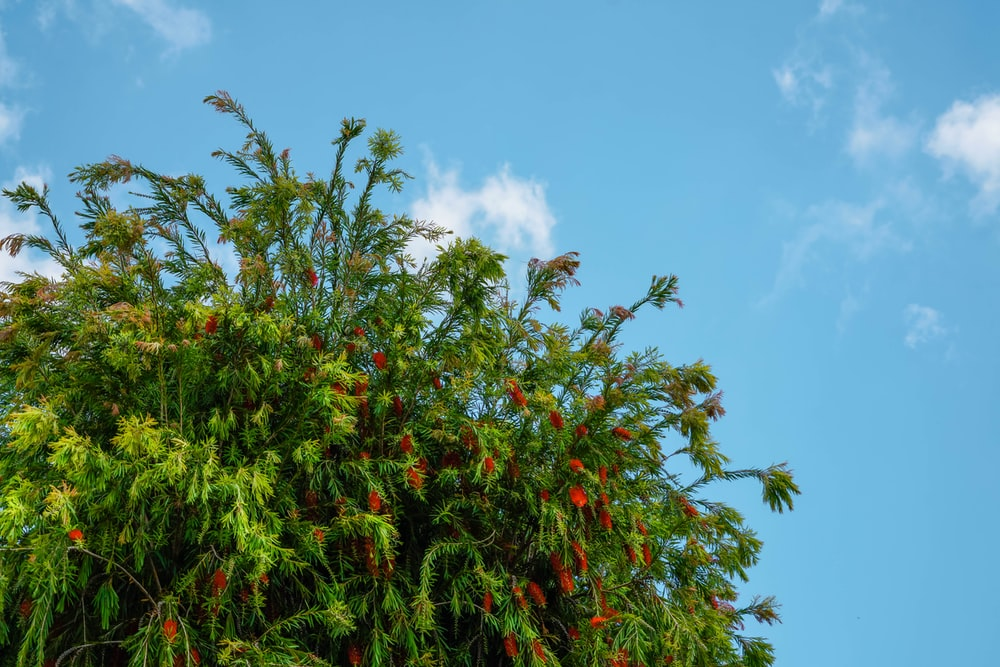green and red leaf tree under blue sky during daytime