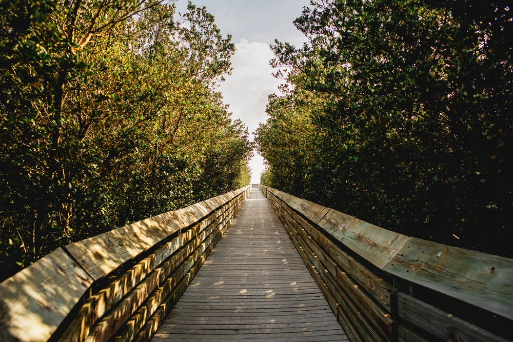 brown wooden bridge between green trees under white clouds and blue sky during daytime