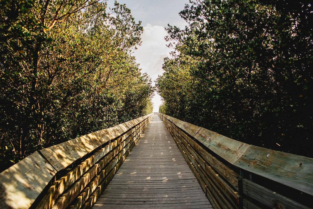 #Trail #Wood #Pathway South Padre Island #SPI #Texas #Warm #Greenery