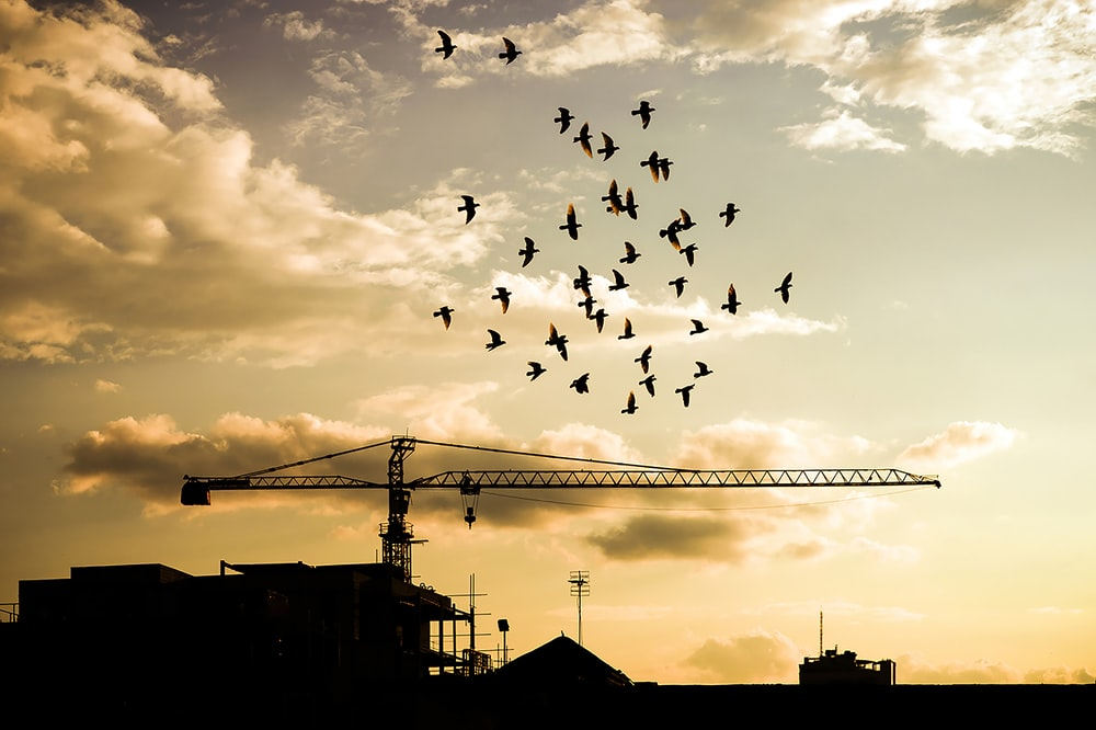 silhouette of birds flying over the building during sunset
