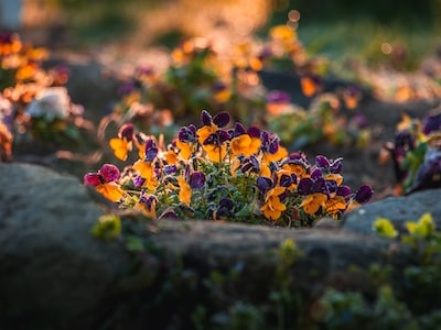 yellow and purple flowers on green grass during daytime