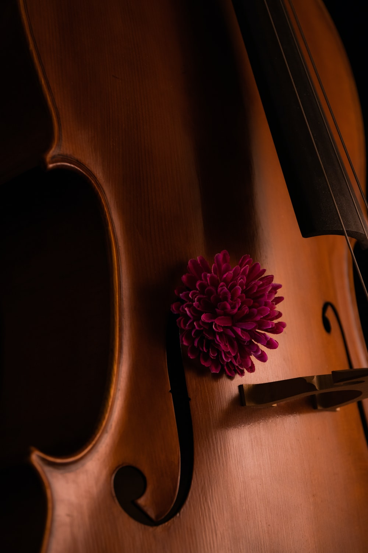 brown violin with pink flower