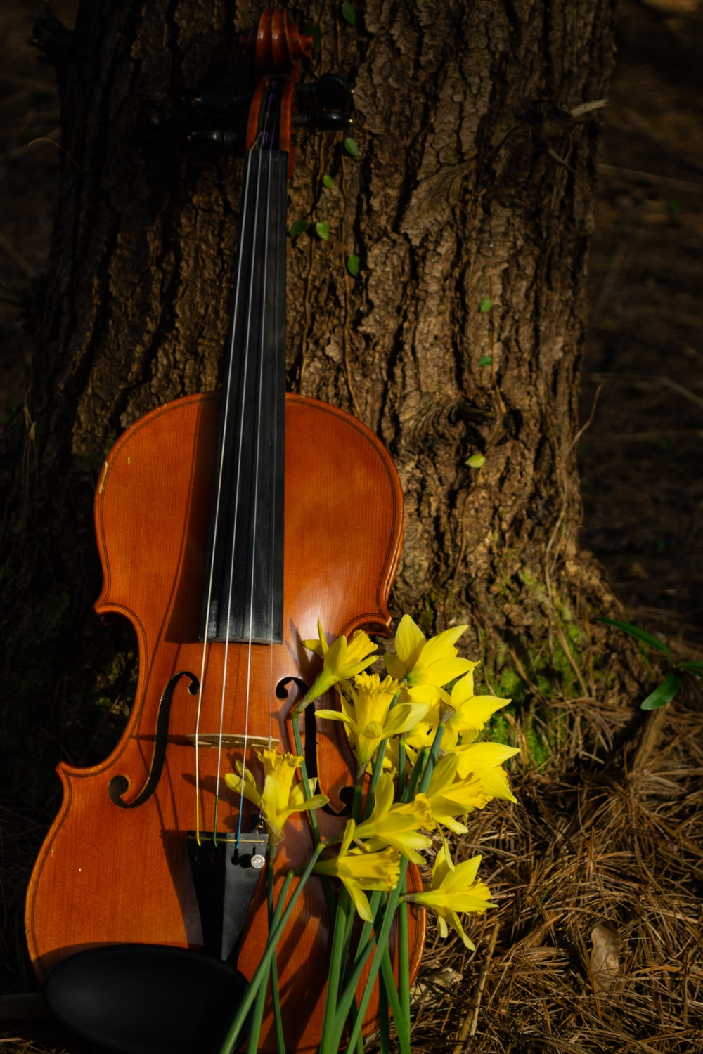 brown violin on tree trunk