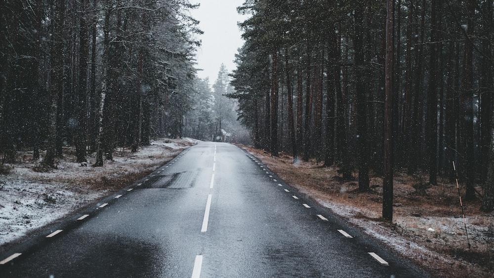black asphalt road between trees during daytime