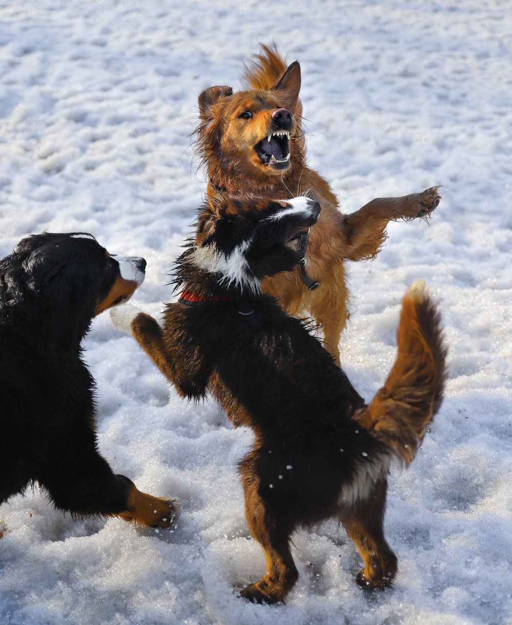 black and brown short coated dog running on snow covered ground during daytime