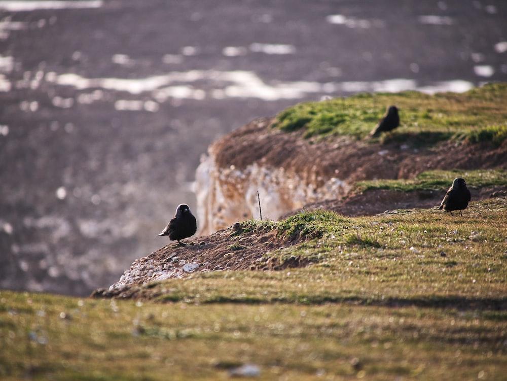black bird on brown rock during daytime