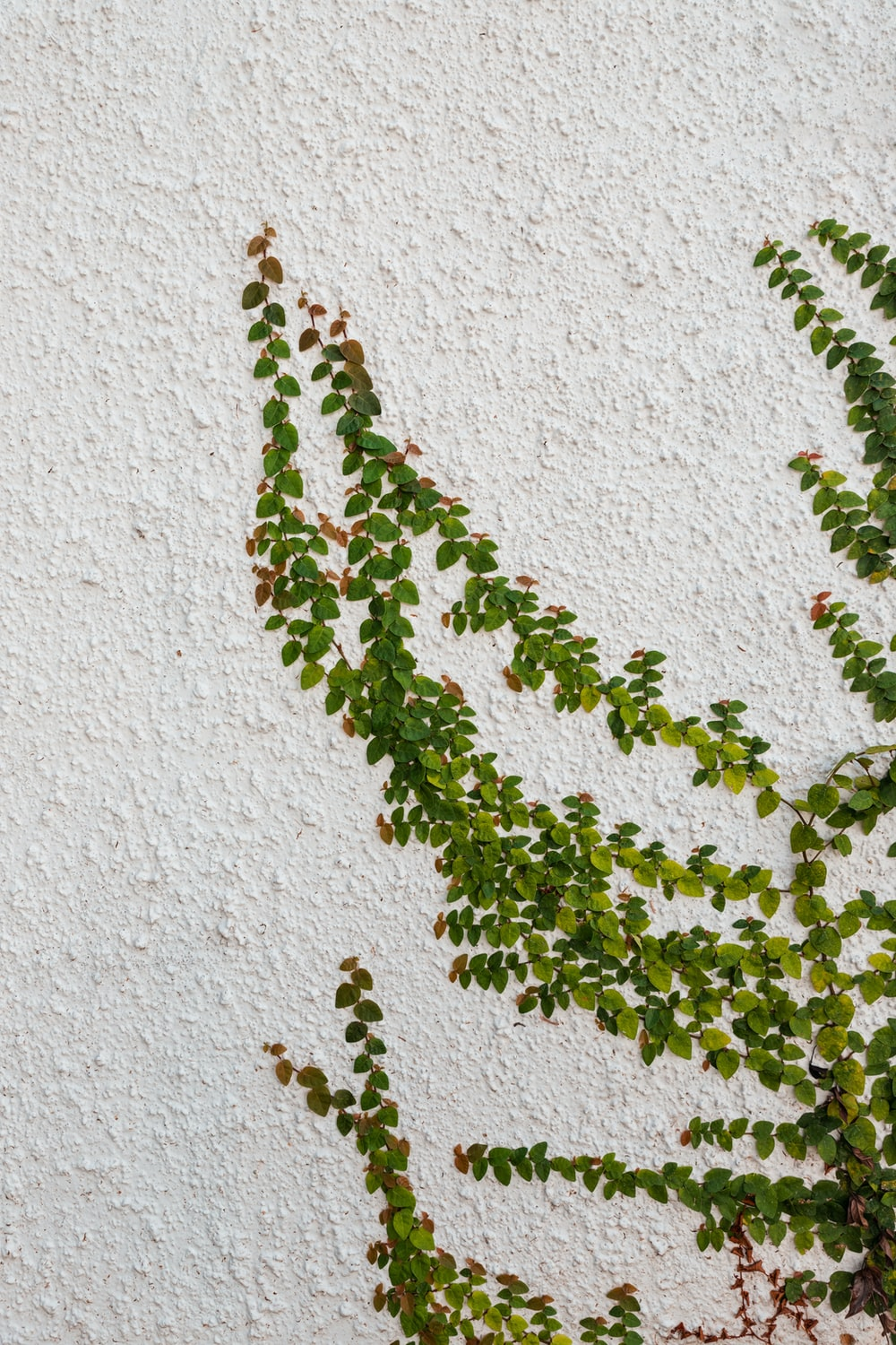 green and brown plant on white concrete wall