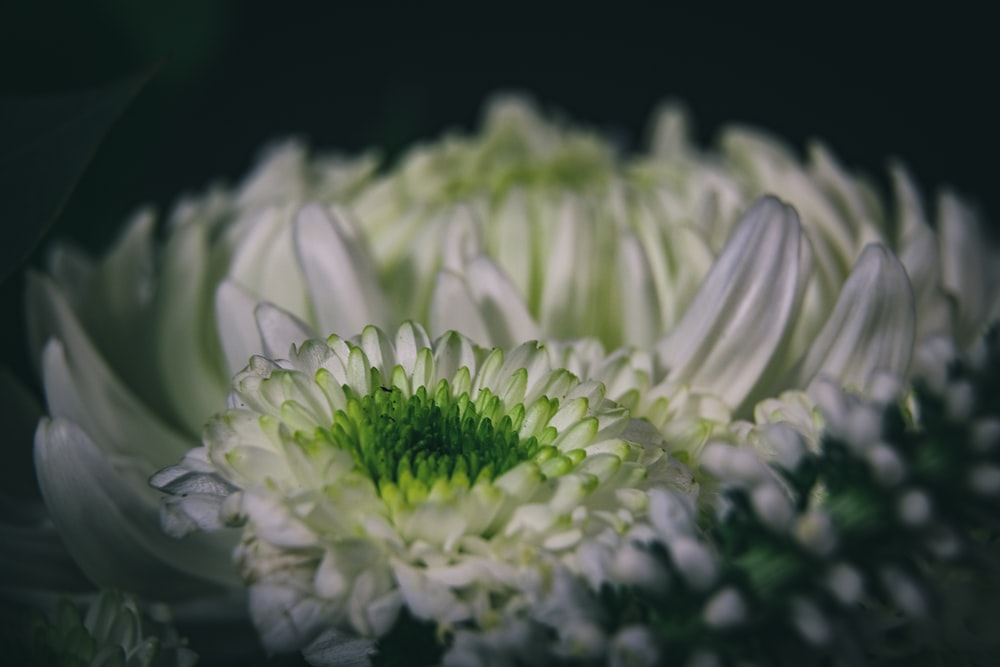 white and green flower in close up photography