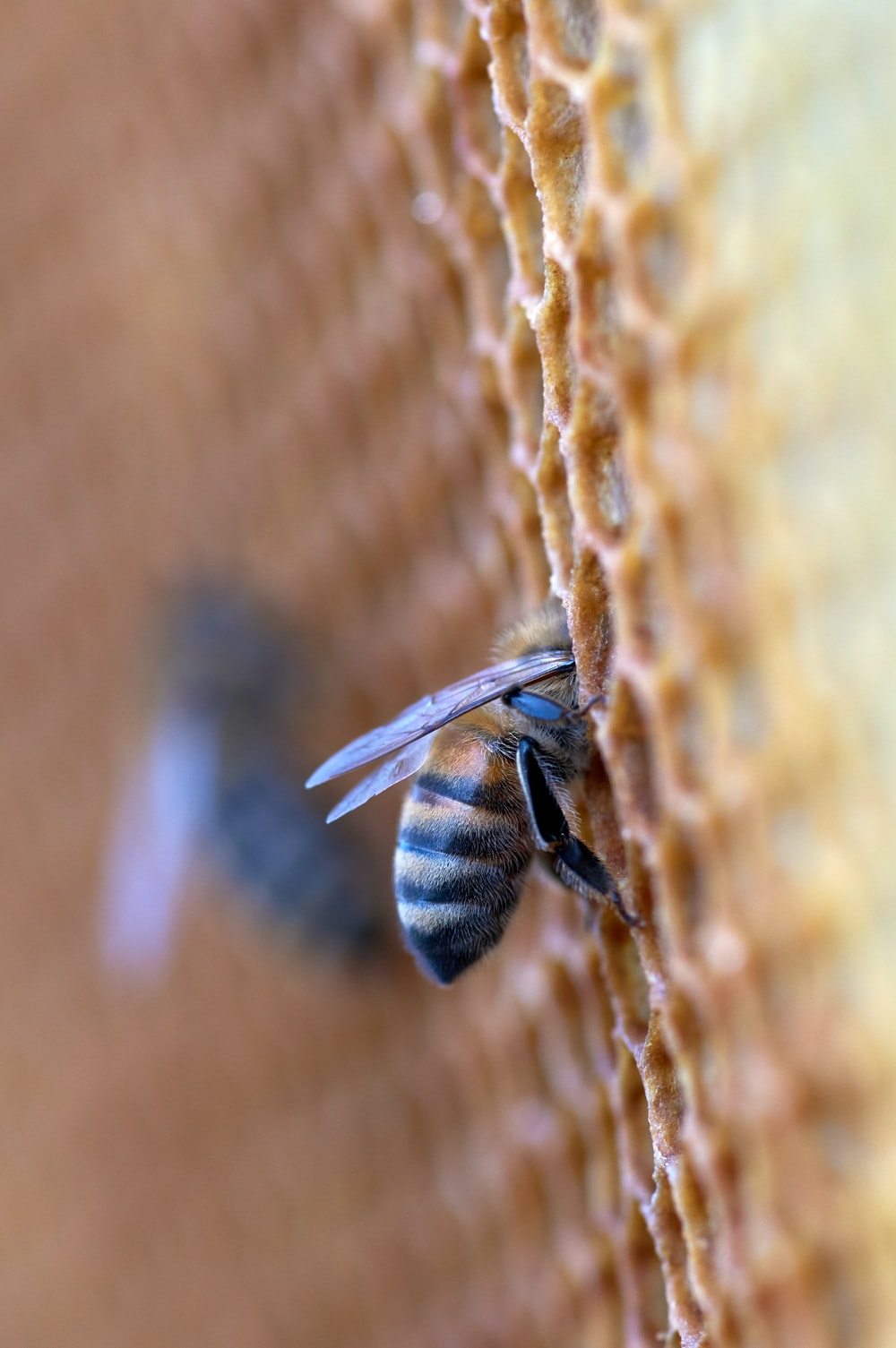 black and yellow bee on brown textile