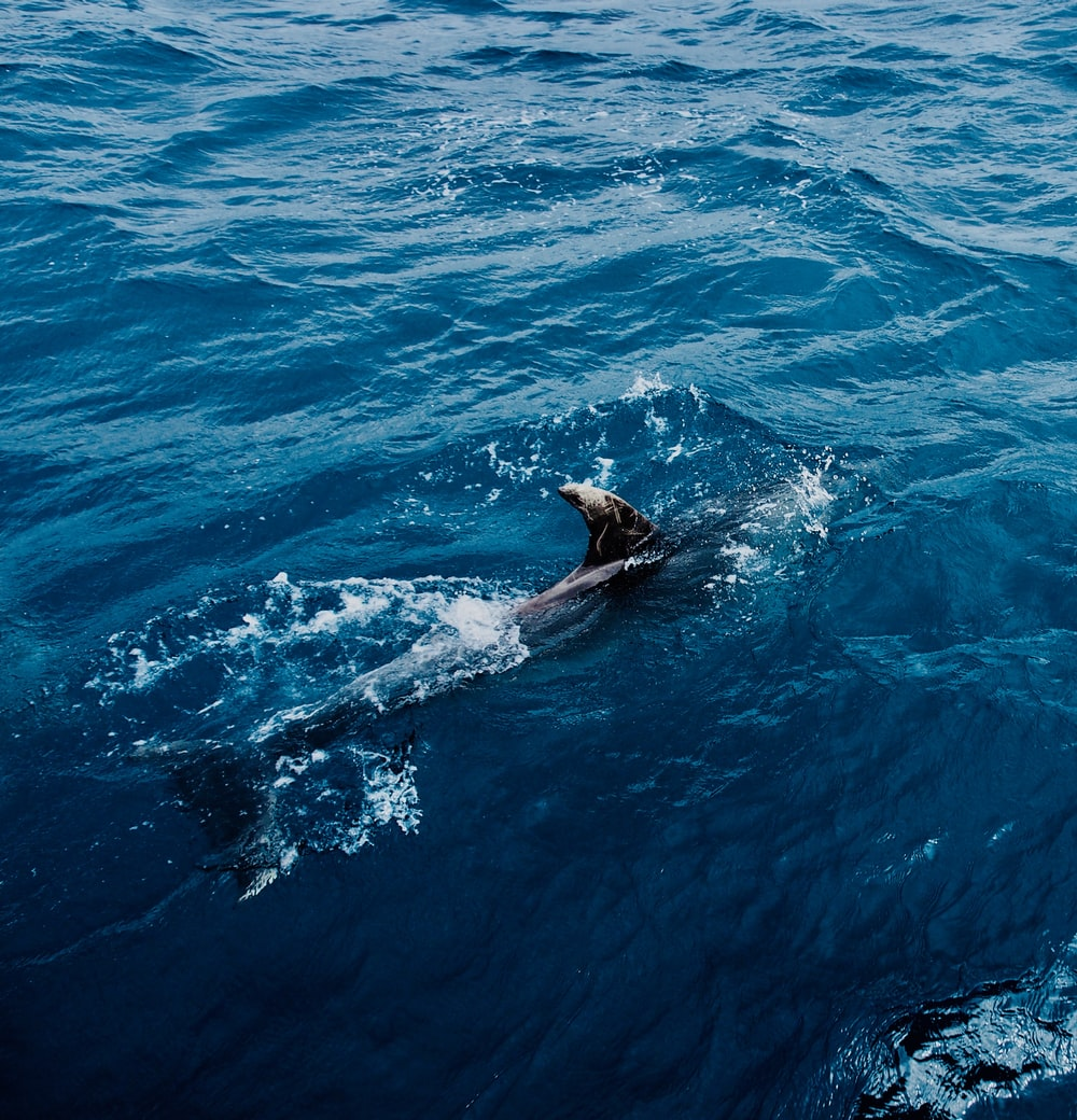 black seal swimming on blue water