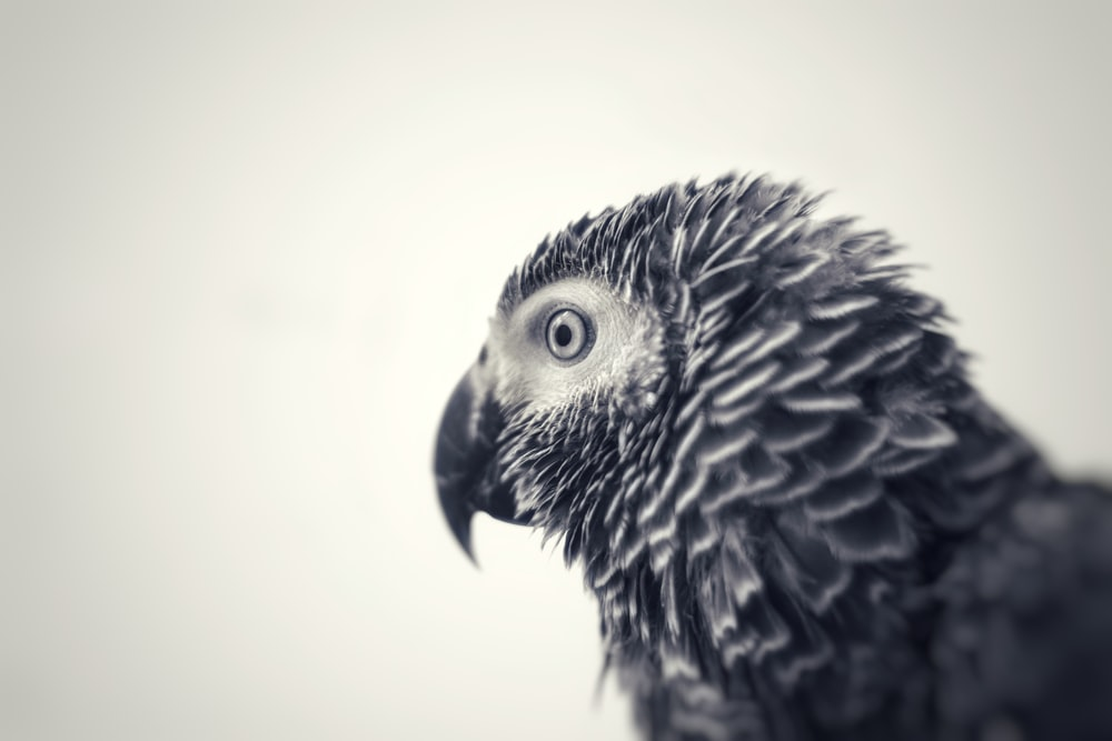 black and white bird in white room