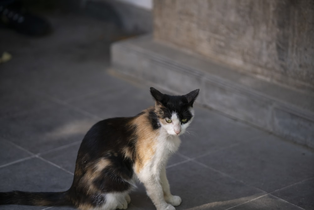 calico cat on black floor