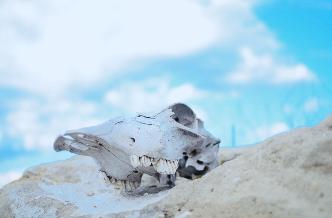 cow skull on rock in front of blue sky