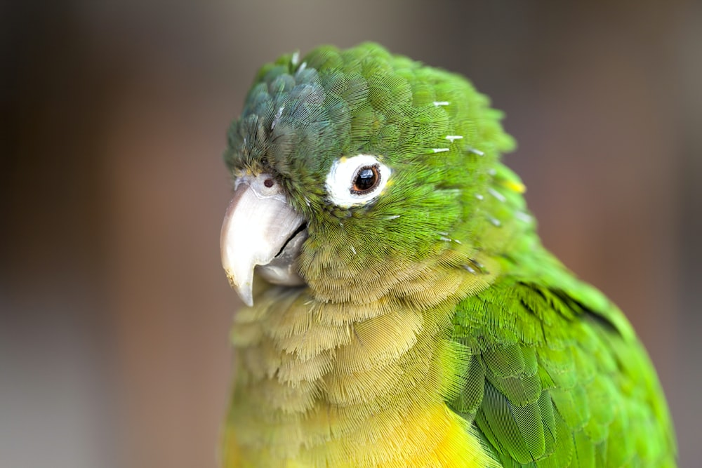 green parrot in close up photography