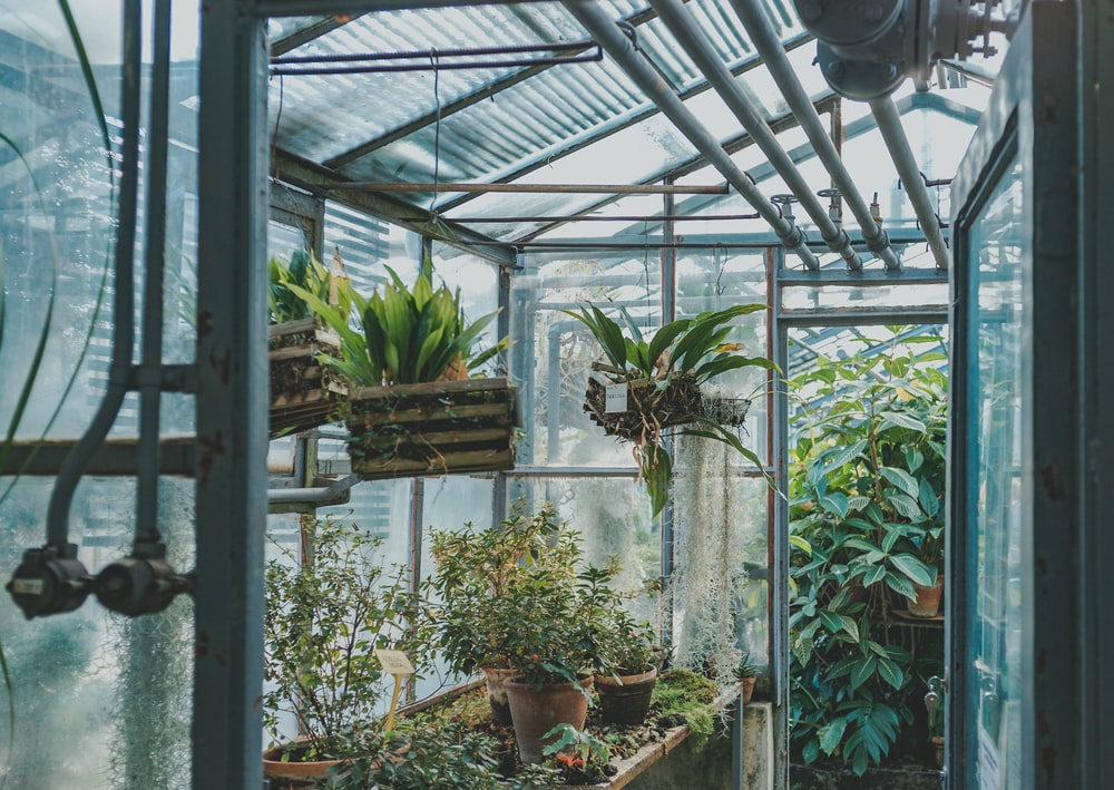 green plants in greenhouse during daytime