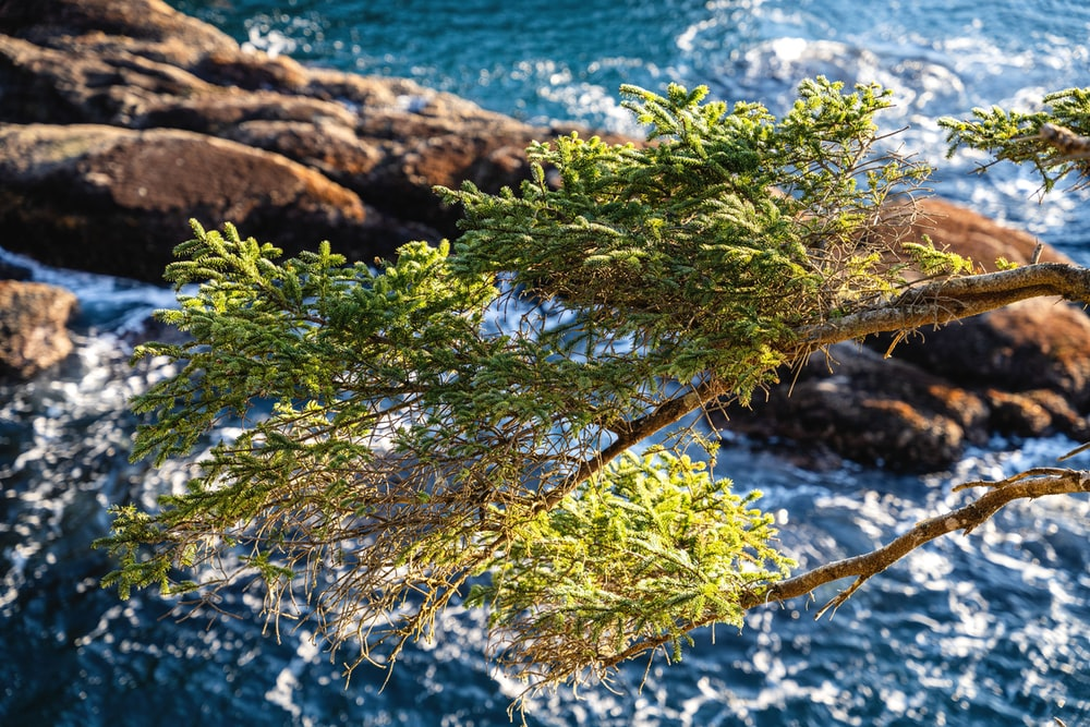 green plant on brown rock