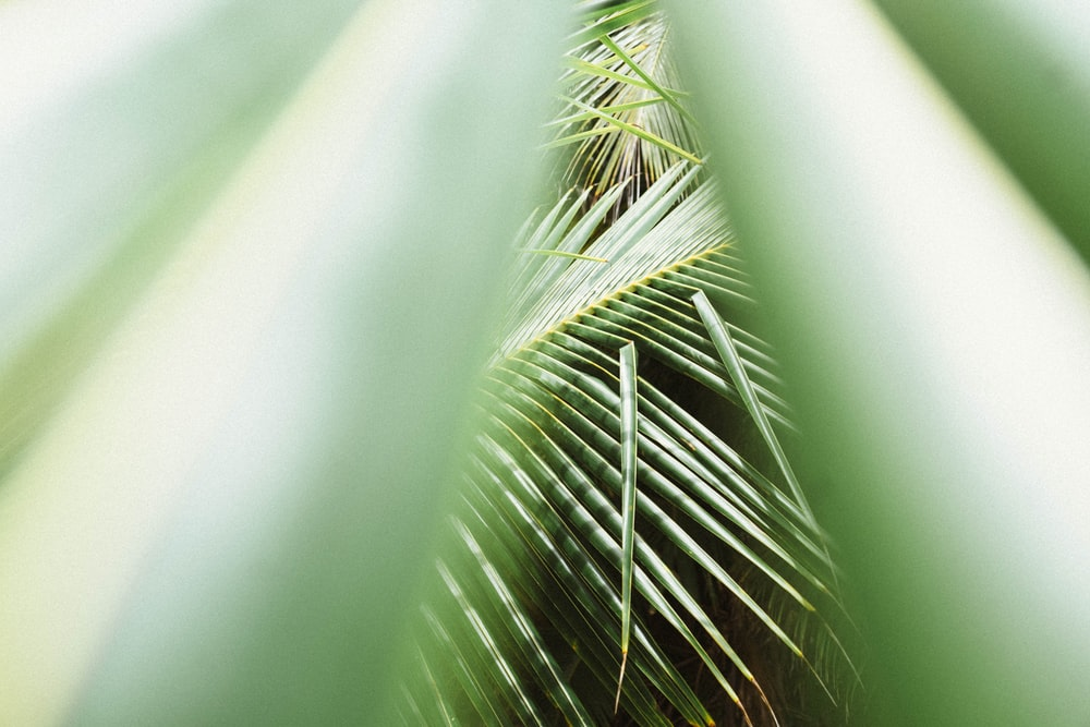 green palm plant in close up photography