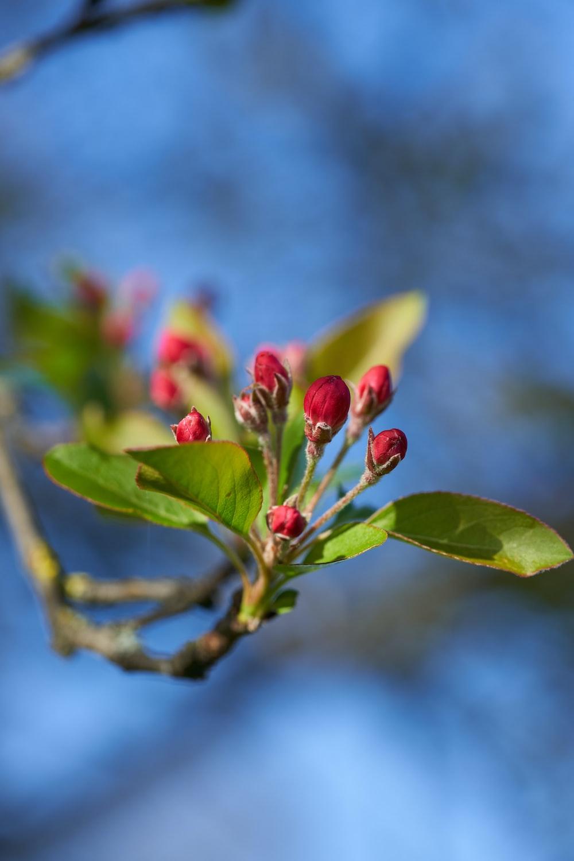 red and green flower bud in tilt shift lens