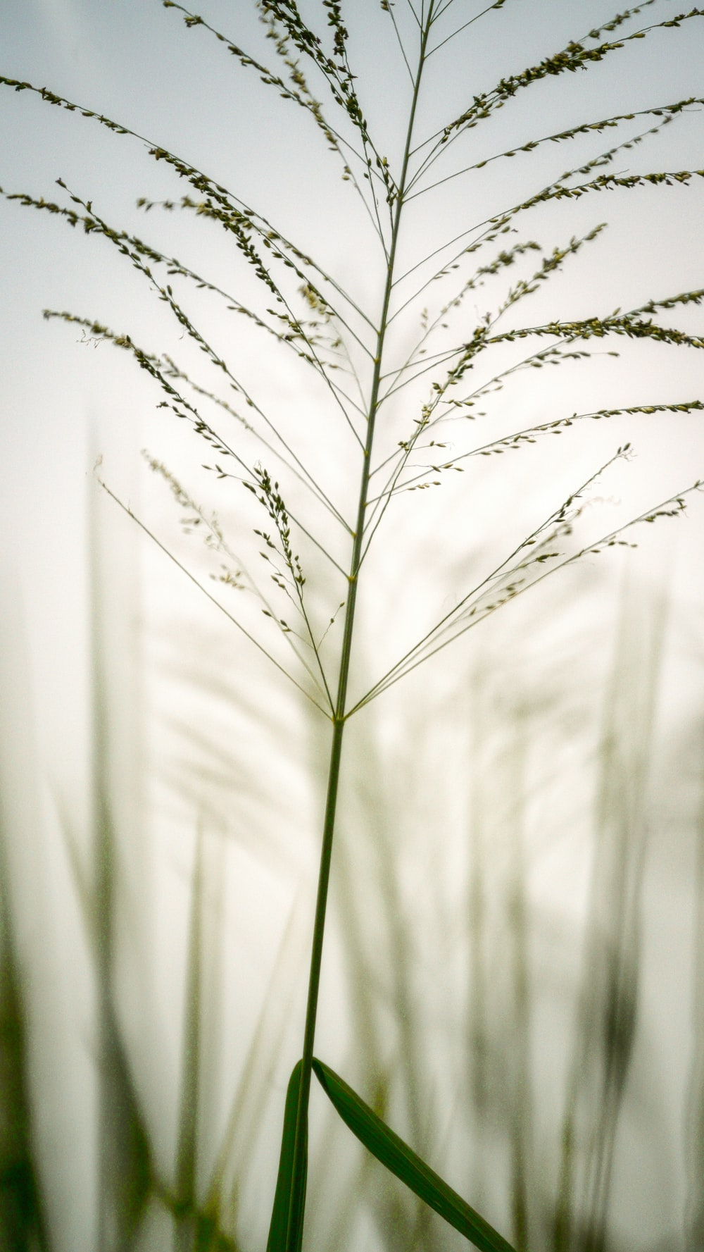 grayscale photo of grass with water droplets