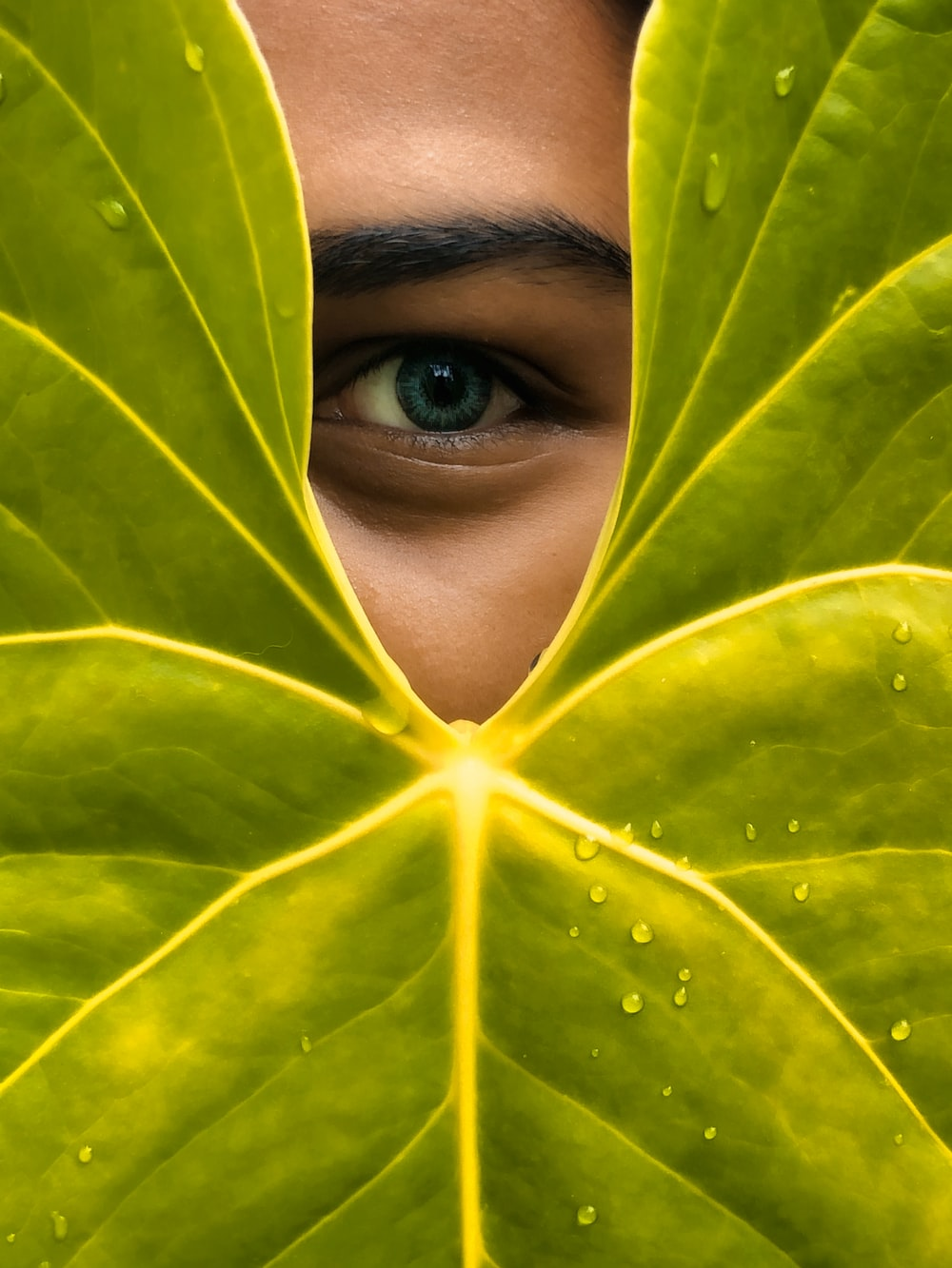 womans face covered with green leaves