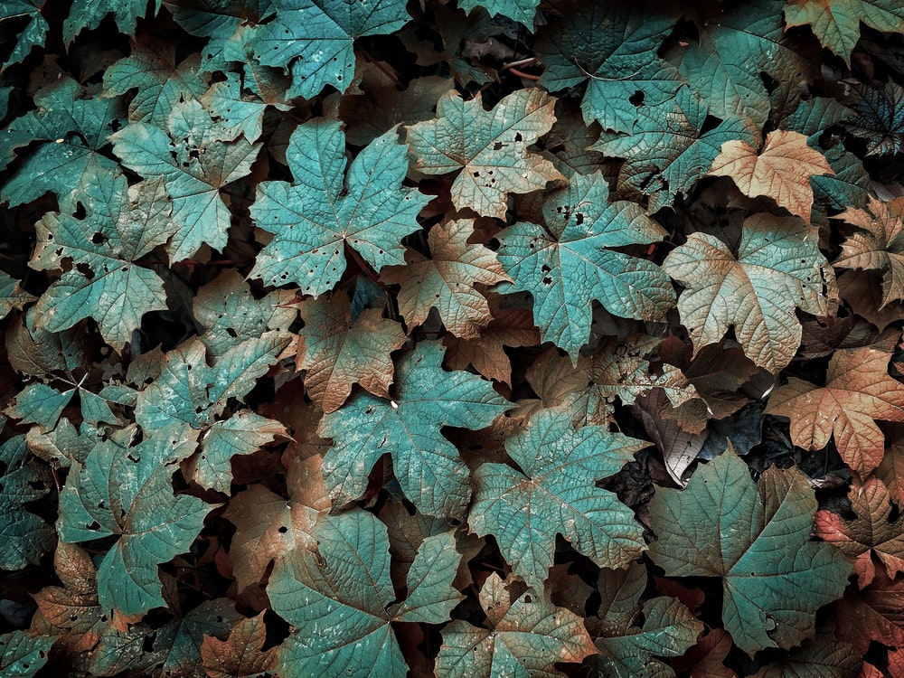 green and brown leaves plant