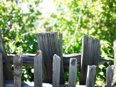 brown wooden fence near green tree during daytime