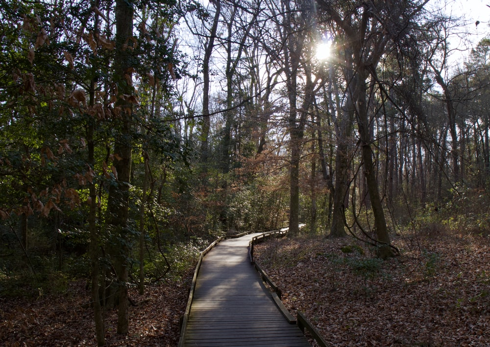 brown wooden pathway between trees during daytime
