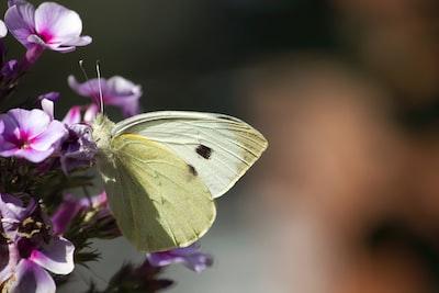 white and purple butterfly on brown stem in tilt shift lens