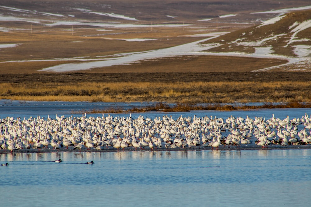 flock of black and white birds on water during daytime