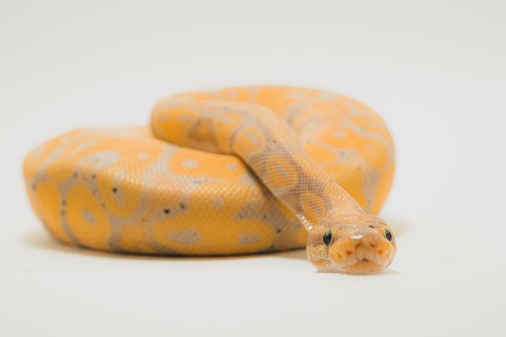 白い表面に茶色とベージュのヘビ