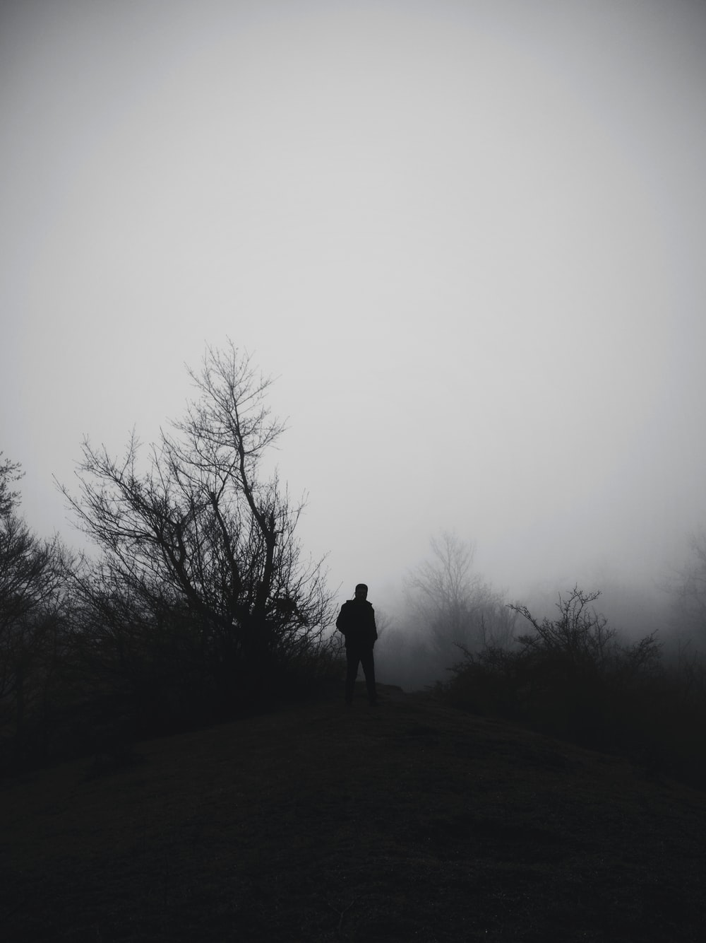silhouette of person standing on foggy field