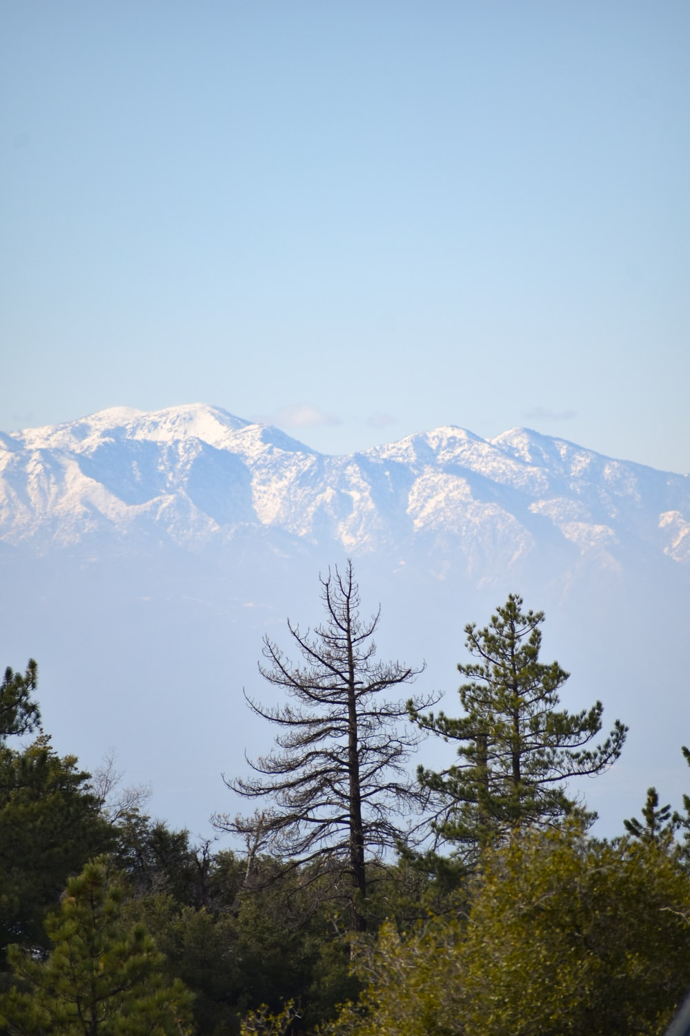 green pine tree near snow covered mountain during daytime