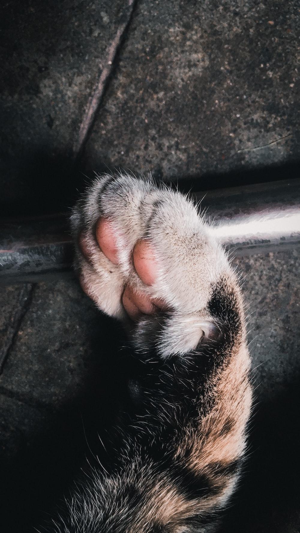brown tabby cat paw on black concrete floor