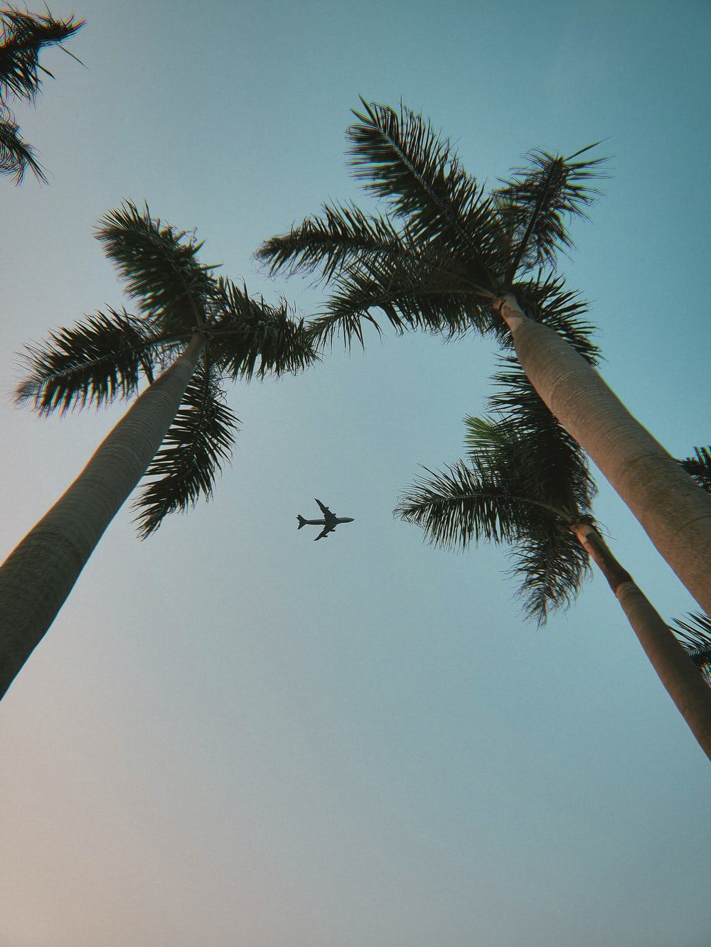 black bird flying over palm tree during daytime