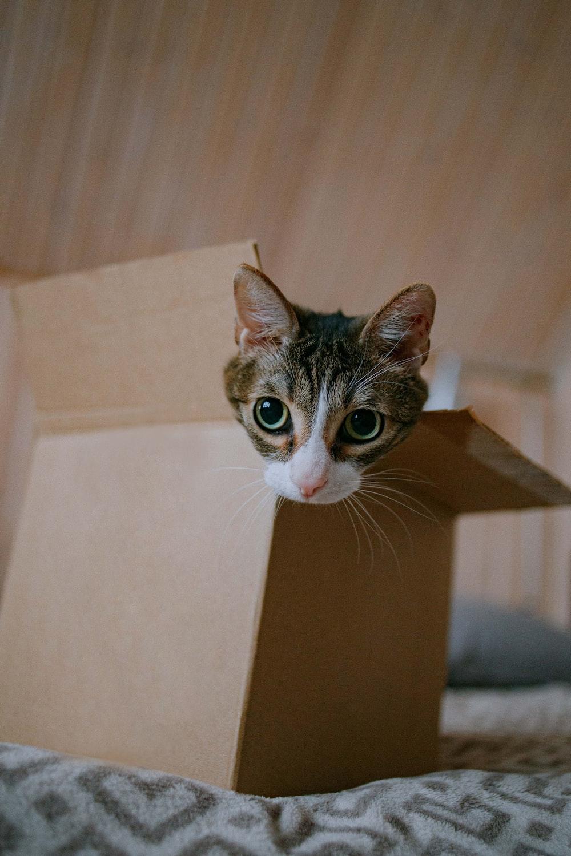 brown tabby cat in brown cardboard box