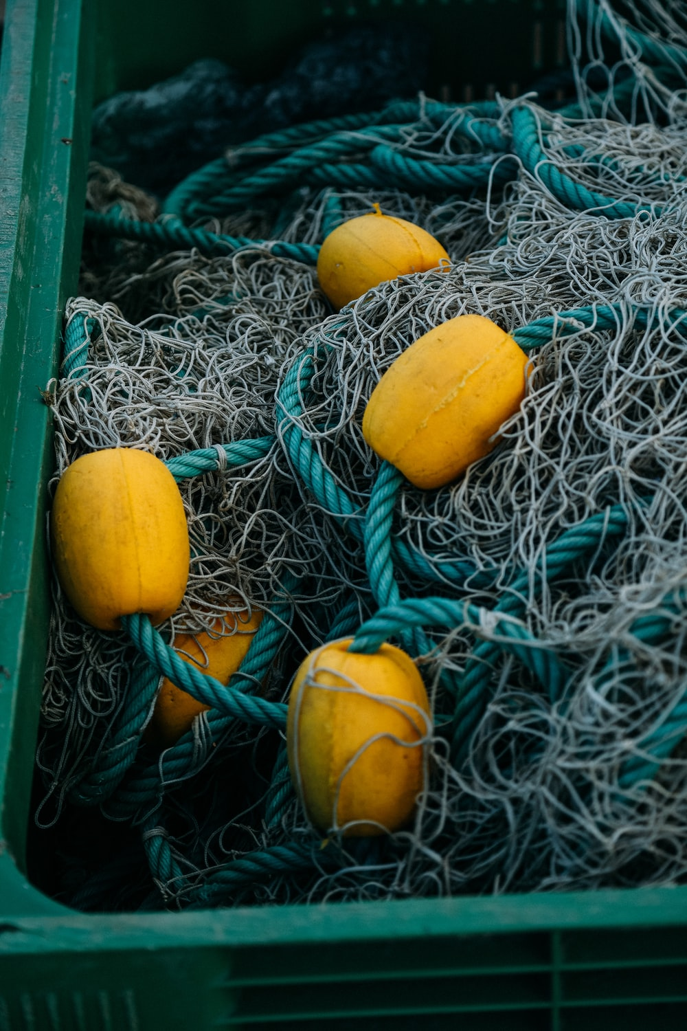 yellow round fruit on green and blue rope