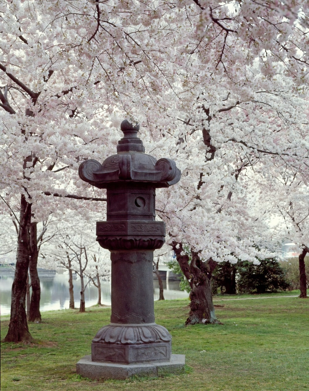 Cherry trees along the Tidal Basin with Japanese Lantern placed in the park in 1954.