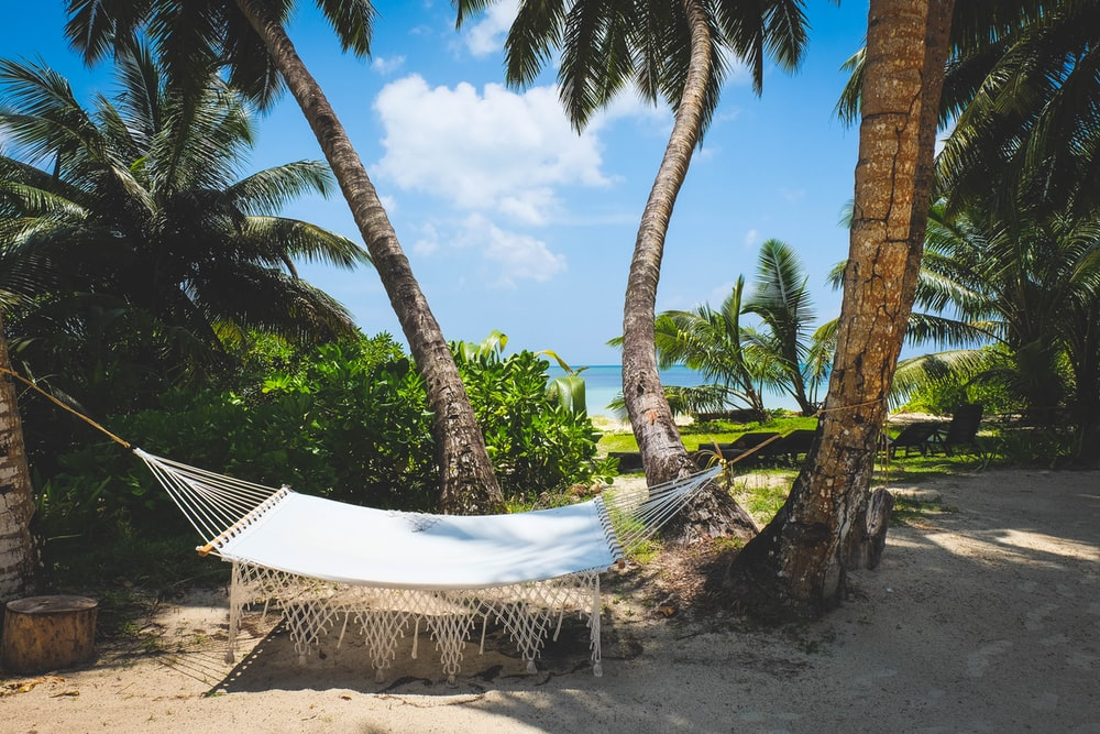 white and black lounge chairs near palm trees under blue sky during daytime
