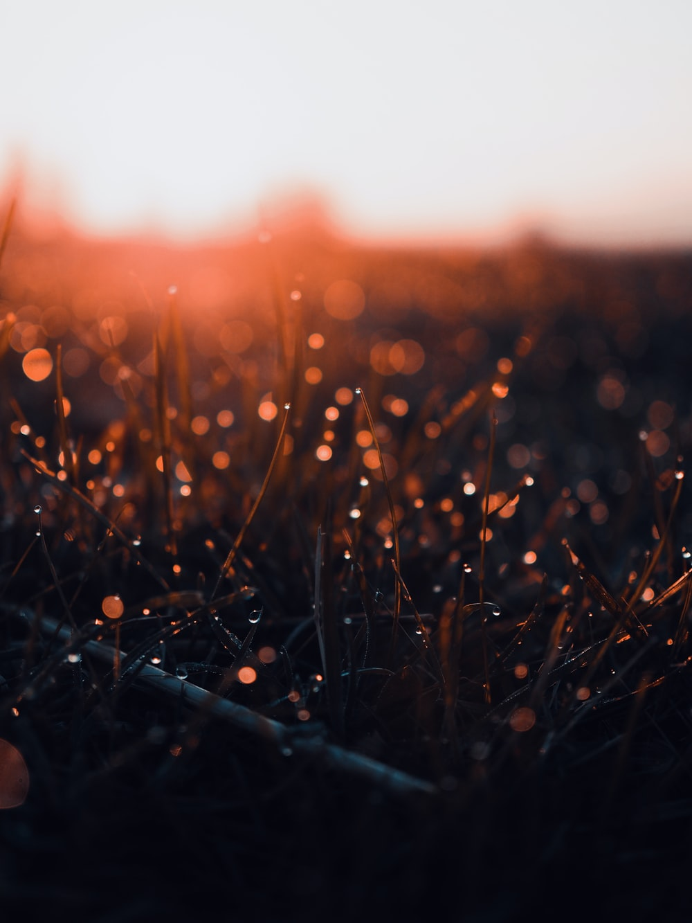water droplets on grass during sunset