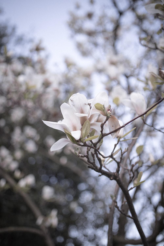 white flower on brown tree branch during daytime