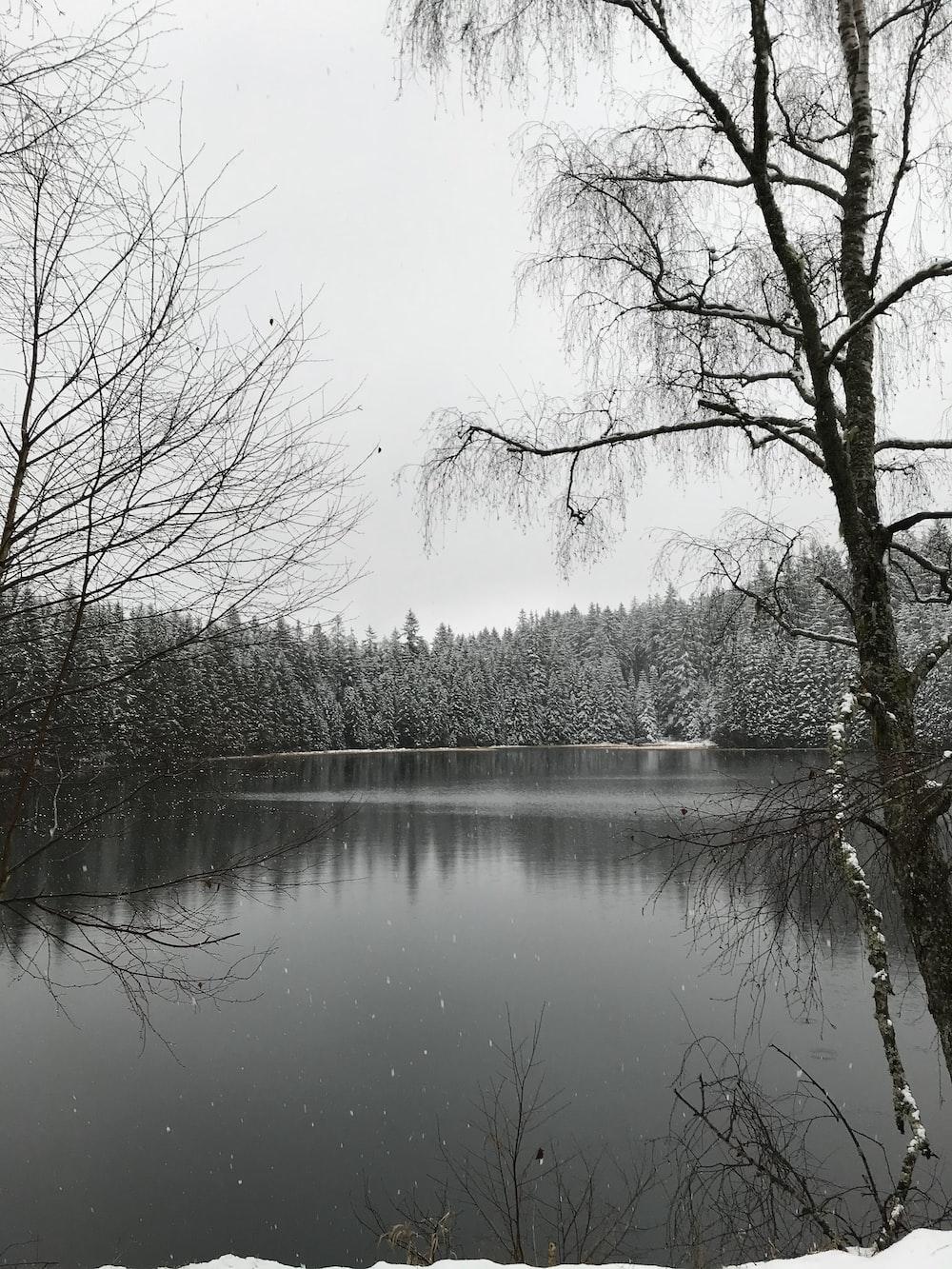leafless trees near lake under white sky during daytime