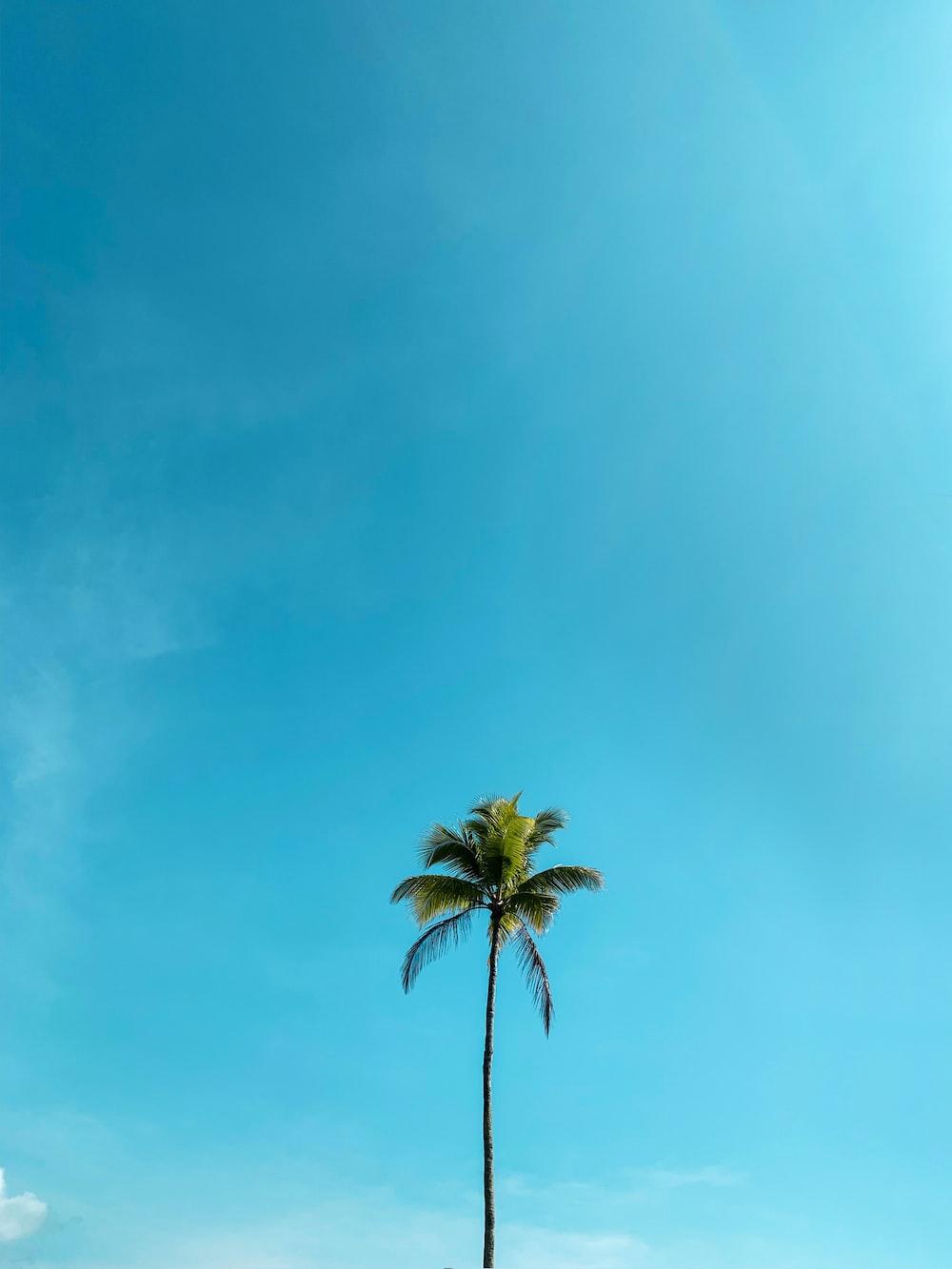 green palm tree under blue sky