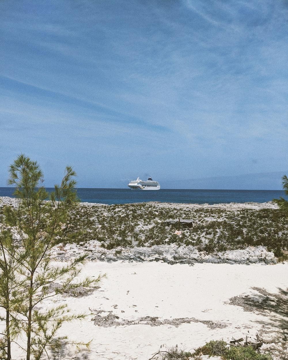 green tree on white sand beach during daytime