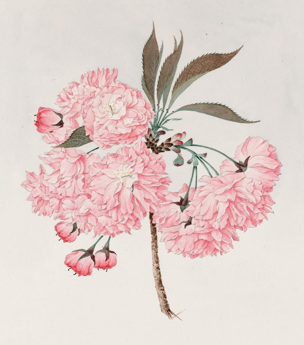 Watercolor of kwan-zan (barrier mountain) cherry blossoms.