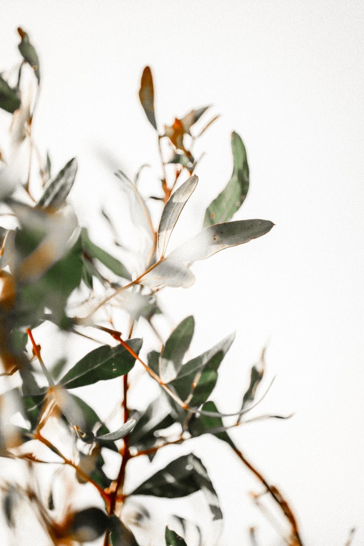 white and brown leaves in tilt shift lens