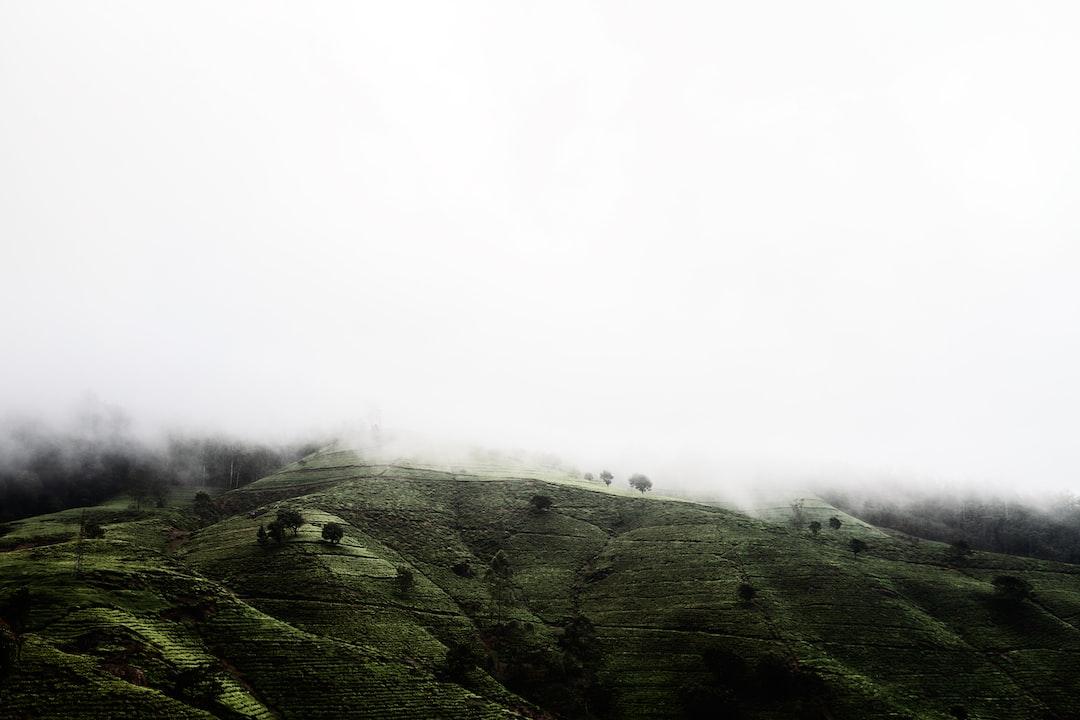 Hills full of tea plantations shrouded in mist.