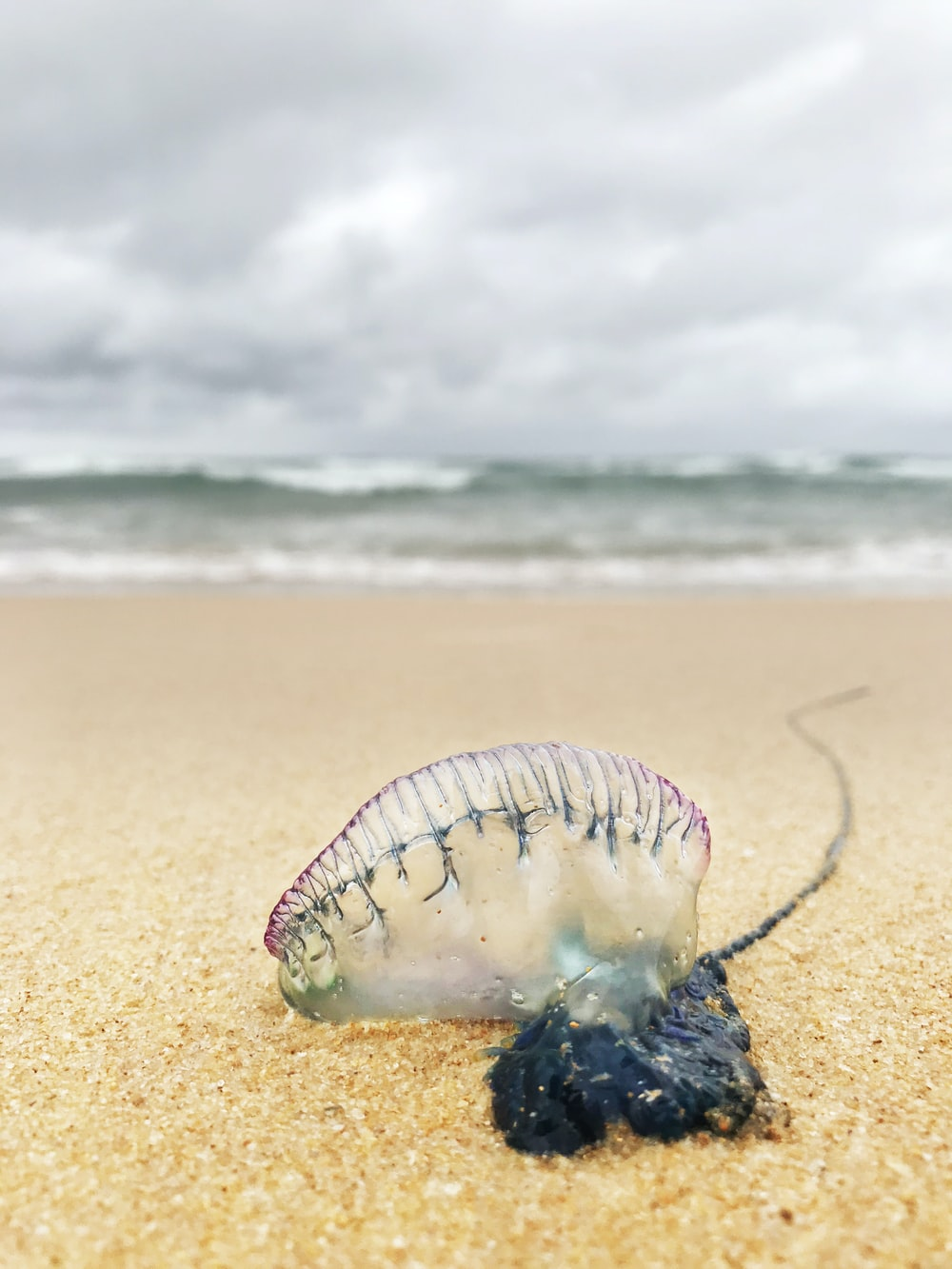 purple and white sea creature on beach shore during daytime